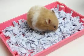 hamster bedding alternative materials