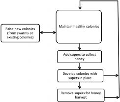 Honey Processing Flow Chart Beekeeping Flow Diagram For Unprocessed Honey Production