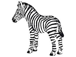Small Picture Printable Coloring Pictures Of Zebras