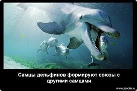 Жуткие факты про дельфинов фото интересные факты о дельфинах в  Самцы дельфинов формируют союзы с другими самцами