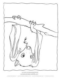 Small Picture Vampire Bat Coloring Page Bats