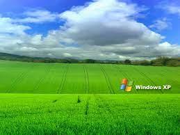 Grass Windows XP Wallpapers - 3D HD ...