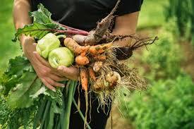 Image result for organic vegetables