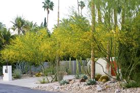 Steve Martino Landscape Designer Corners Edges 3 Palm Springs Planting Steve Martino