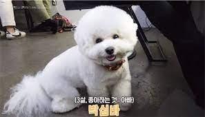 パクソジュン愛犬