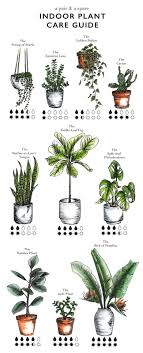 How to Care for Indoor Plants | A Pair \u0026 A Spare