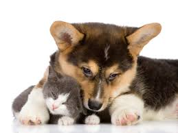 puppy and kitten.  Puppy Puppiesandkittens Throughout Puppy And Kitten N