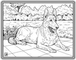Downloadbare High Resolution Kleurplaat Pagina 27 Honden Serie