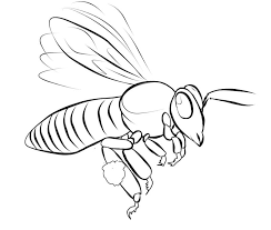 HD wallpapers bee pollination worksheets for kids ...
