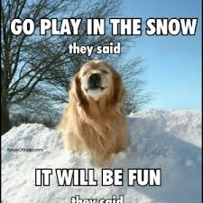Funny-Golden-Retriever-Memes-1-300x300.jpg via Relatably.com