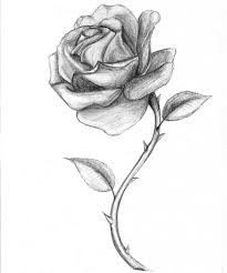 Black And White Drawings Of Roses Black And Red Roses Drawings