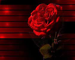 Flower Rose Flower Nature Wallpaper Hd ...