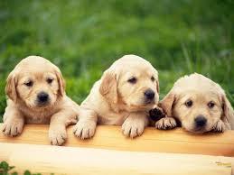 ultra hd cute pets 4k 1600x1200 px