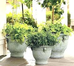 extra large planters for trees pottery barn outdoor palm uk indoor