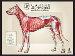 Canine Acupuncture Meridian Chart Charts Herbsmith Rx