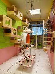 cool cat room ideas for multiple cats using cat shelves and hammocks