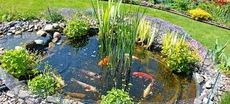 koi ponds are a gorgeous focal point for any outdoor space but they won t take care of themselves maintain your koi pond with seven maintenance tips that
