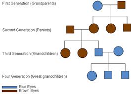 Eye Color Recessive Dominant Chart Understanding Genetics