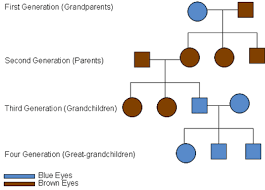 Eye Dominance Chart Understanding Genetics