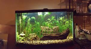 29 Gallon Tank Light My 29 Gallon Tropical Planted Aquarium Fish Tank Stand