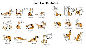 Cat Body Language Chart Cats Language This Is How To Understand Your Cat Body