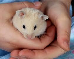 On hamster chubby teens likes