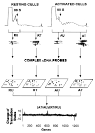 Messenger Rna Translation State The Second Dimension Of