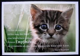 Katzensprüche So Cute Katzen Coole Katzen Und Katzensprüche