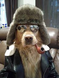 Top 10 Dog Winter Outfits - Can Dogs Eat This