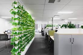 office indoor plants. Biophilia - Biophilic Design Using Indoor Plants Office