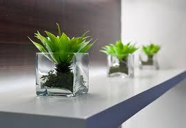 Grüne Oase Pflanzen Als Dekoelement Zuhause Bei Sam