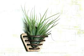 wall plant containers air plant wall mount cool air plant holders air plant stand air plant