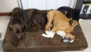 big barker dog beds.  Barker Big Barker Dog Bed Review For Beds A
