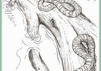R Rated Coloring Pages New Vagina Page X Rated Adult Coloring Book
