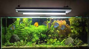 Fish Tank How To Clean Algae From A Fish Tank Howcast The Best How To