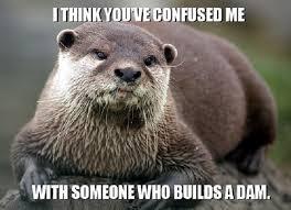 Beaver Meme I think you've confused me…