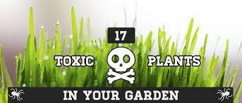17 poisonous plants in your garden