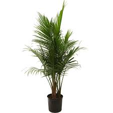 Decorative Indoor Trees Indoor Plants Garden Plants Flowers Garden Center