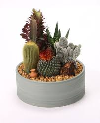 Small Picture The 25 best Mini cactus garden ideas on Pinterest Mini cactus