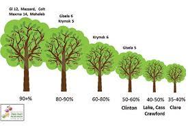 Rootstocks Wsu Tree Fruit Washington State University