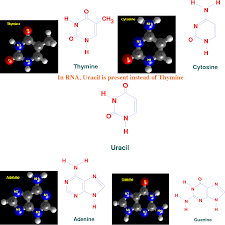Figure 1 From Biomolecules Introduction Structure And