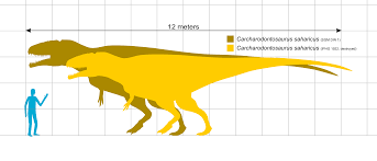 carcharodontosaurus size file carcharodontosaurus scale svg wikimedia commons