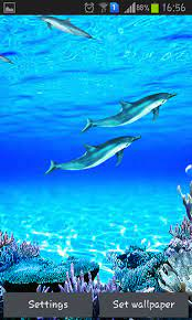 dolphins sounds live wallpaper for