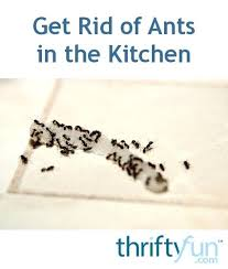 Ants In Kitchen Cabinets Awesome Design