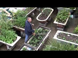 how this guy grows organic vegetables