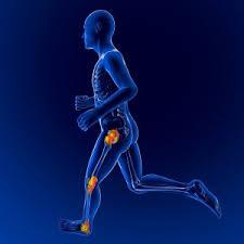 「膝関節総論」の画像検索結果