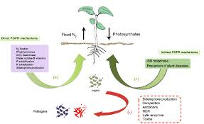 Plant Nutrient Interaction Chart Mechanisms Of Plant Growth Promoting Rhizobacteria