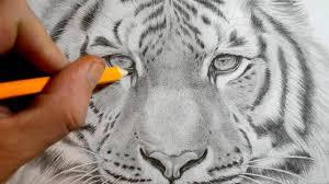 tiger face drawing pencil. Beautiful Face Drawing A Tiger Face Pencil At Getdrawings  Free For  Personal Use E