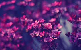 purple wallpaper 13