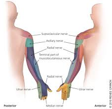 Peripheral Nerve Entrapment And Injury In The Upper
